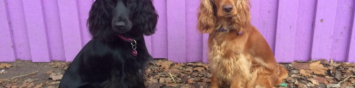 Luna og Maggie