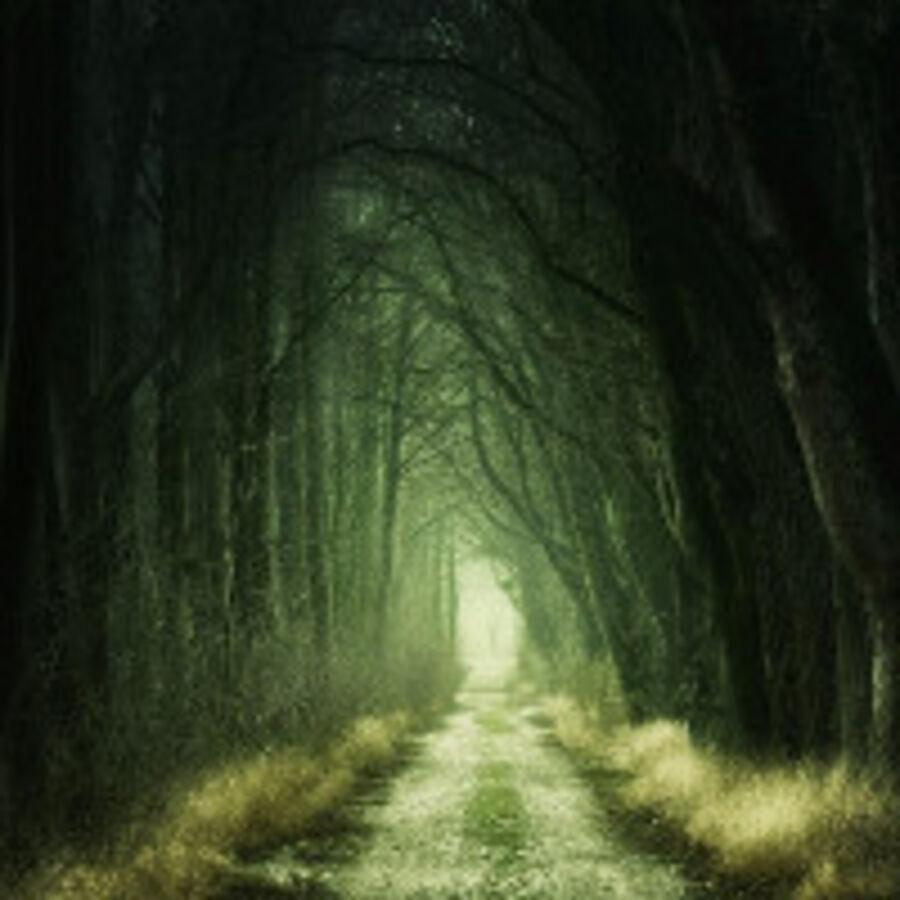 Billede af dyster skov