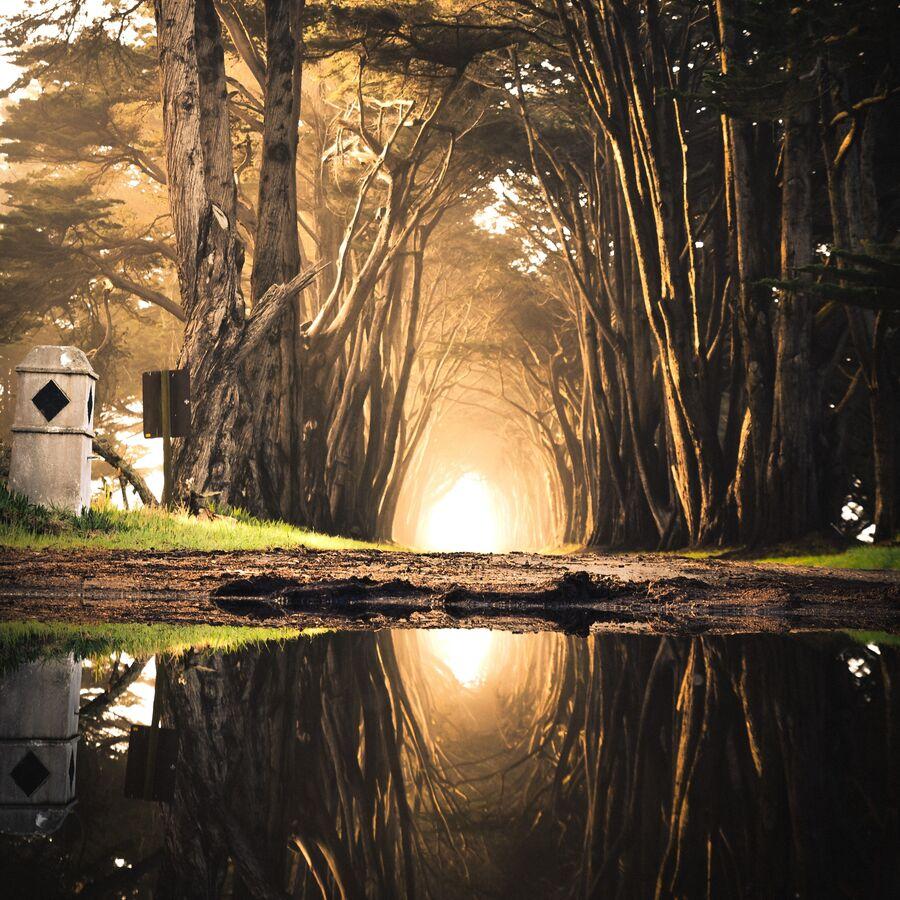 Billede af træer og sø