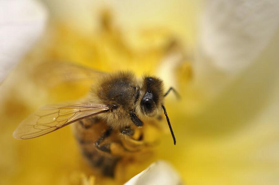 Vilde vidunderlige bier